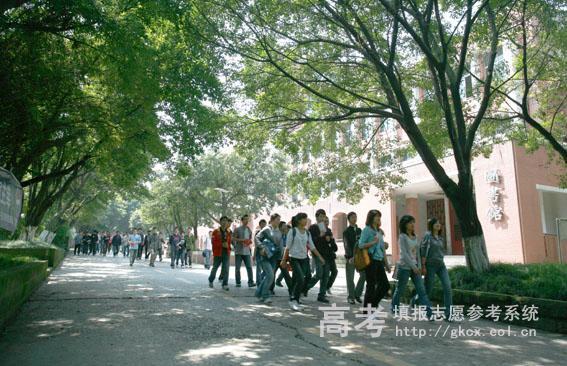 重庆能源职业学院学院校园绿树成荫
