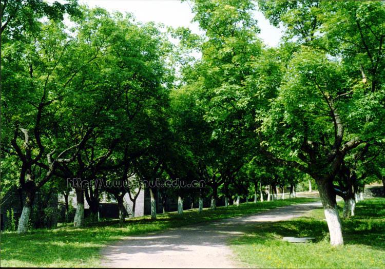 陕西理工学院校园环境校园绿荫